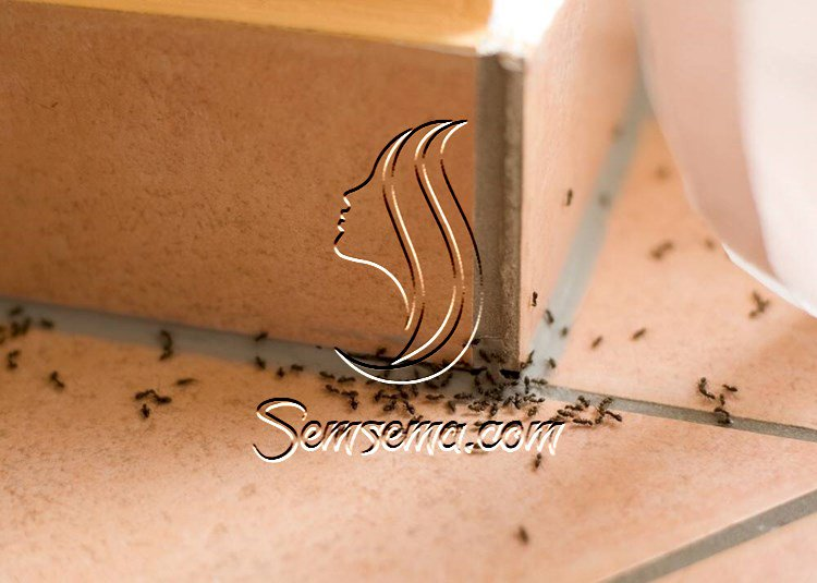 طرق تخلصك من النمل في الصيف بسهولة
