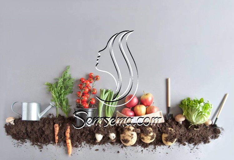 تعلمي زراعة الخضروات والفاكهة في المنزل